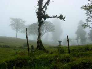 RainforestTreeFog